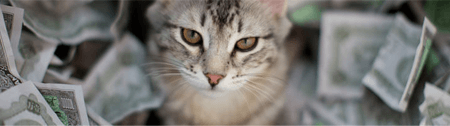 Succession animaux domestiques